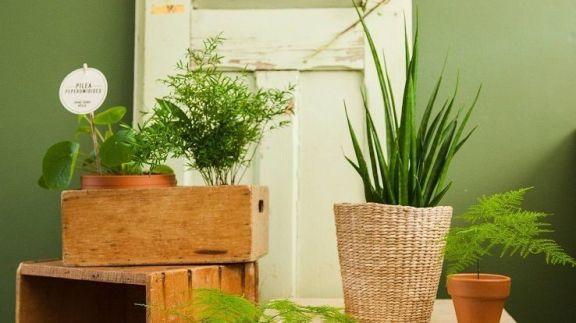 spg-groen-16006-36-site