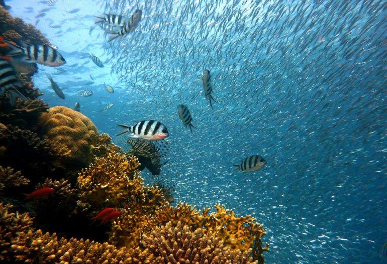 koraalfoto waterday